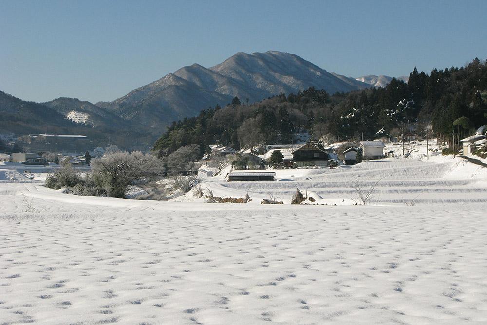 鯛の巣山 冬